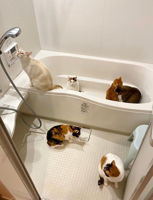 【写真】床暖房をつけたら、猫たちが一斉に…!Twitterで19.4万「いいね」を集めた、猫まみれな一枚