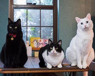 「赤ちゃんが好きすぎる」ベビーシッター猫で話題!個性豊かな3匹の猫たち