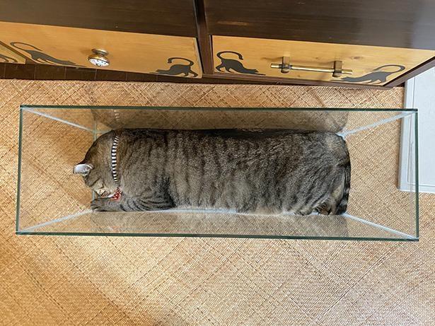 【写真】奇跡のジャストフィット!水槽にぴったり収まる猫がかわいすぎる