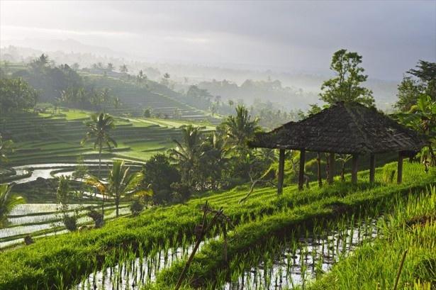 【写真を見る】1月のおすすめインドネシアの「ウブド」は平均宿泊料金が年間のピーク時と比べ24%安価