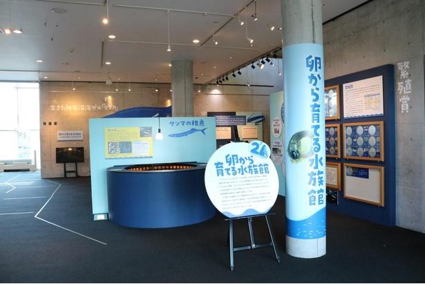 「卵から育てる水族館」は、アクアマリンふくしま本館1階 ホワイエで開催
