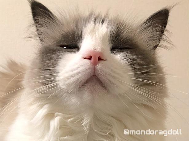 眠すぎて半目…?