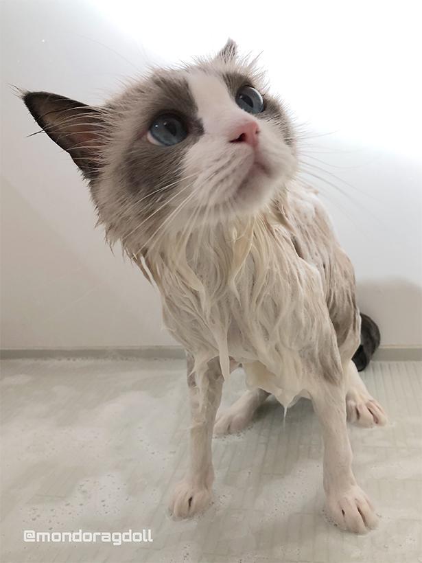 お風呂に入ってサッパリ!