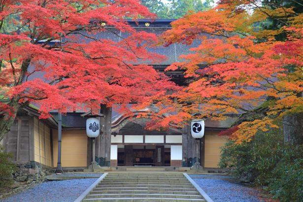 艶やかな紅葉に包まれる「正門」。金剛峯寺の建物の中で一番古く、1593年に再建されたもの/金剛峯寺