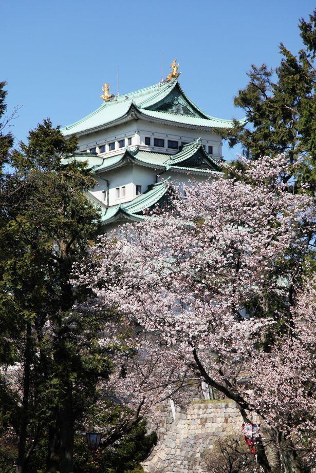 【コロナ対策情報付き】名古屋城の楽しみ方完全ガイド!見どころやおすすめコースを紹介|ウォーカープラス
