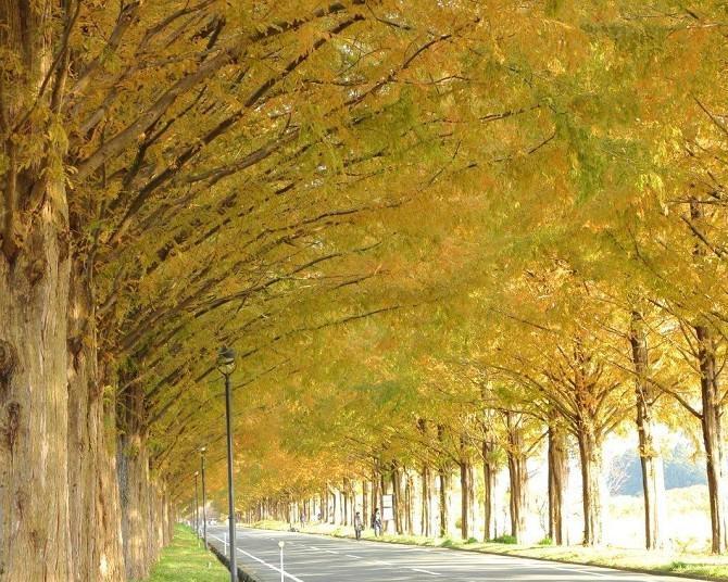 メタセコイア並木の紅葉と一緒に楽しみたい!滋賀・高島の立ち寄りスポットを紹介