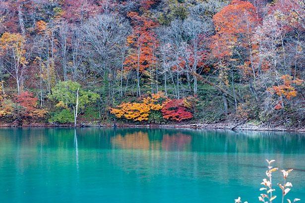 白水湖(岐阜県白川村)