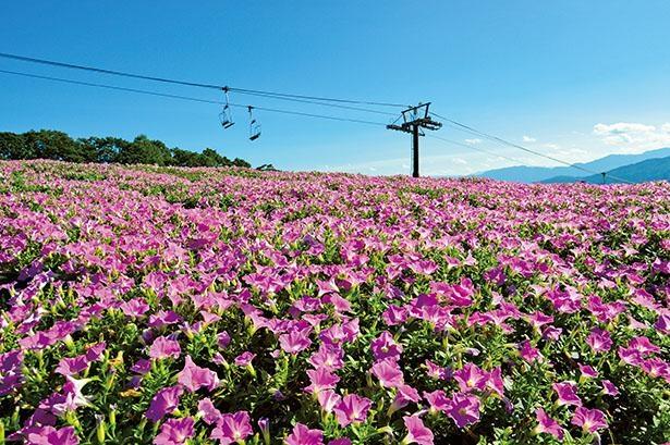 ひるがのピクニックガーデン(岐阜県郡上市)