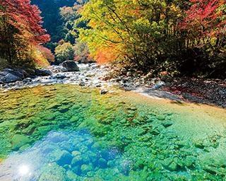 【写真特集】秋に見るべき東海エリアの絶景!紅葉やコスモス畑など、奇跡の光景がズラリ
