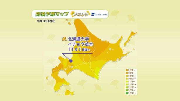 2020年 北海道の紅葉(イチョウ)見頃予想マップ(9月16日現在)