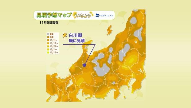 2020年 中部地方の紅葉(イチョウ)見頃予想マップ(11月5日現在)