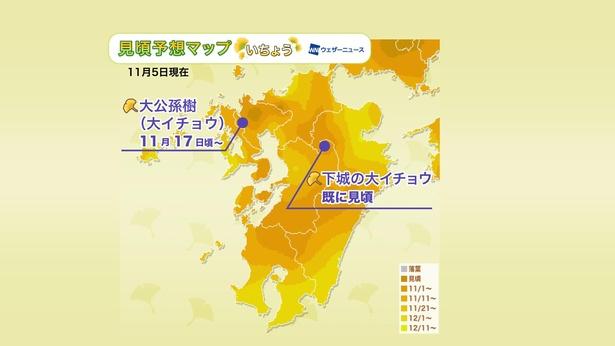 2020年 九州地方の紅葉(イチョウ)見頃予想マップ(11月5日現在)