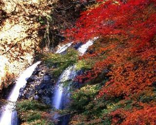ヤマモミジの美しさは格別!茨城県大子町の「月待の滝」で紅葉が見頃