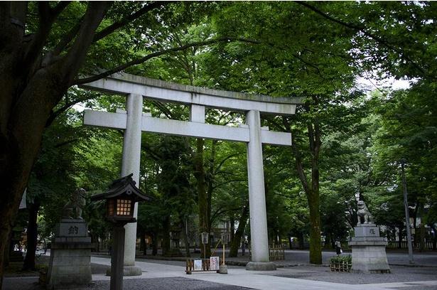 御影石製では日本一とされる大鳥居。ケヤキ並木がこの辺りから続く