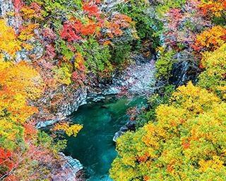東海エリアの秋の絶景ランキング!一生に一度は見たい、感動の光景ベスト10を発表