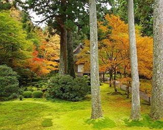 自然豊かな京都大原に佇む名刹「三千院」の見どころを徹底ガイド!行事や季節限定のお守り情報もチェック【コロナ対策情報付き】