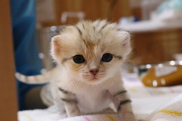 「砂漠の天使」と呼ぶにふさわしい、キュートな赤ちゃん。今は茶色い縞模様があるが、成長と共に縞模様が薄くなる可能性が高いそう