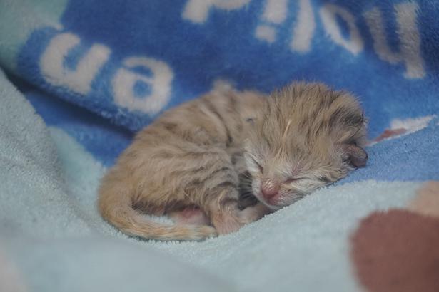 生まれた時は体長15㎝、体重59.6gと手のひらサイズ