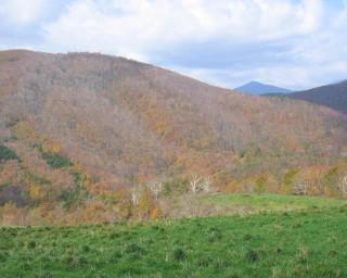 紅葉狩りルートとして人気!岩手県遠野市の荒川高原で紅葉が見頃