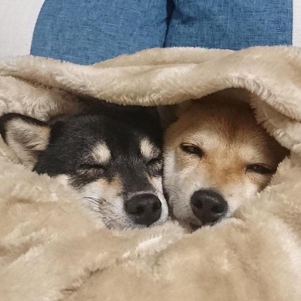 ふかふかの毛布に包まれて、幸せそうな寝顔にキュン!