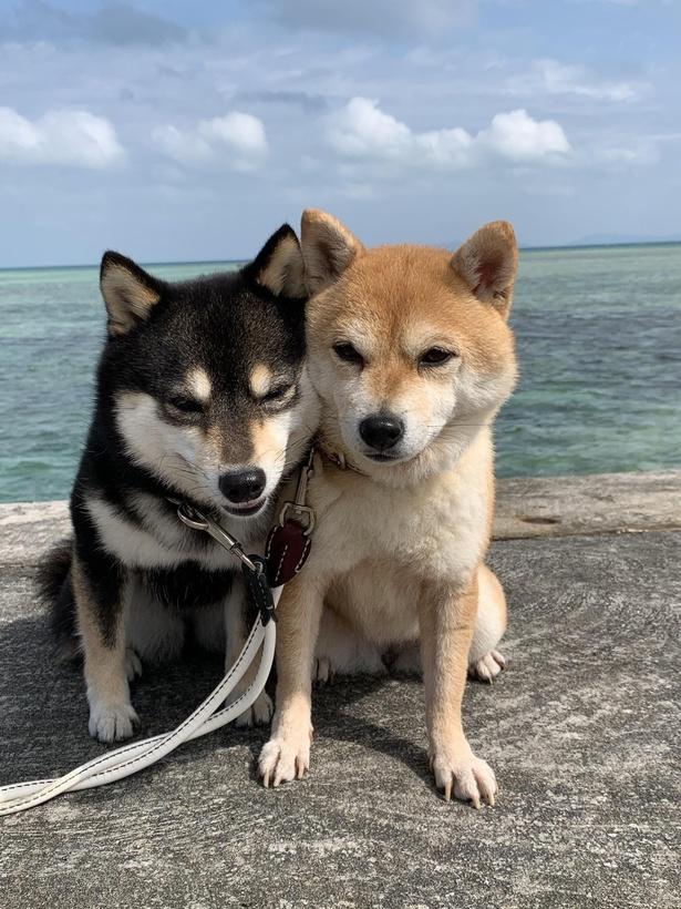 石垣島の美しい海を背景に、頬を寄せ合う2匹