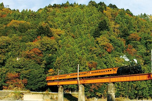 夢のつり橋から紅葉を一望!ジビエやSL列車、温泉も満喫できる、静岡県・寸又峡ドライブコース|ウォーカープラス