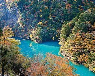 夢のつり橋から紅葉を一望!ジビエやSL列車、温泉も満喫できる、静岡県・寸又峡ドライブコース