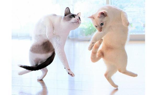 """かわいすぎる""""猫踊り""""!浮世絵から飛び出てきたような1枚"""