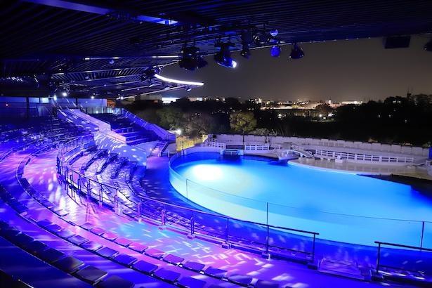 夜のイルカスタジアムを背景に「光る☆クラゲソーダ」を撮影する人が急増中