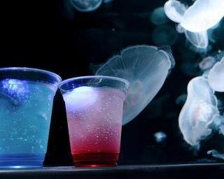京都水族館「夜のすいぞくかん」が延長!幻想的な空間でクラゲやイルカに会える