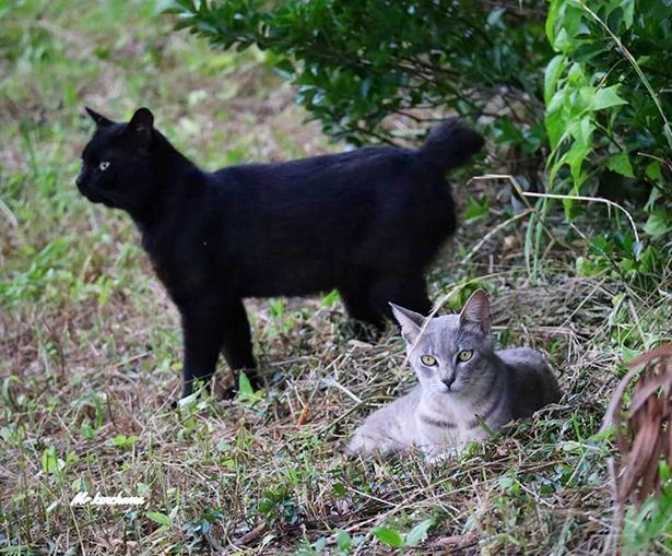 静岡で出会った野生猫のくろたんとタツ