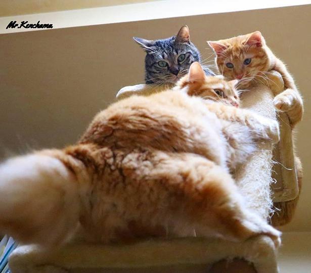 猫好きにはたまらない豊満なおしり