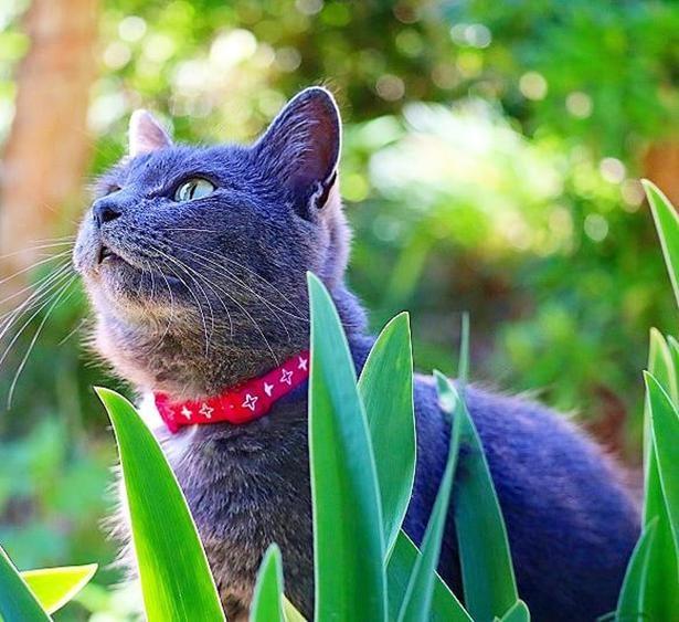 静岡の野良猫から家猫になったコグレ