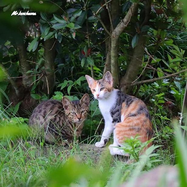最近新たに交流を始めたという、2匹の野良猫