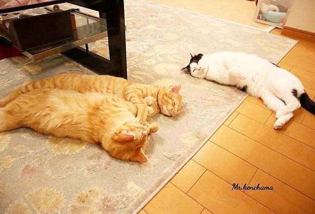 見ているだけで癒される、猫たちのくつろぎ姿
