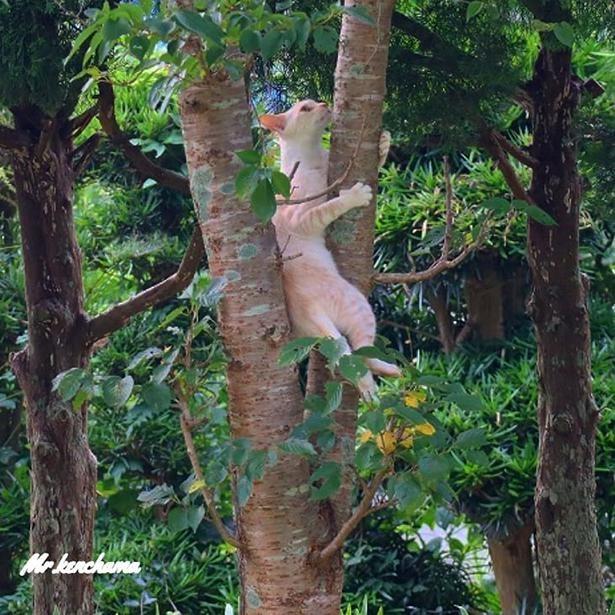 器用に木登り中のいっか