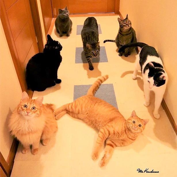 東京で暮らす7匹の猫たちが大集合!