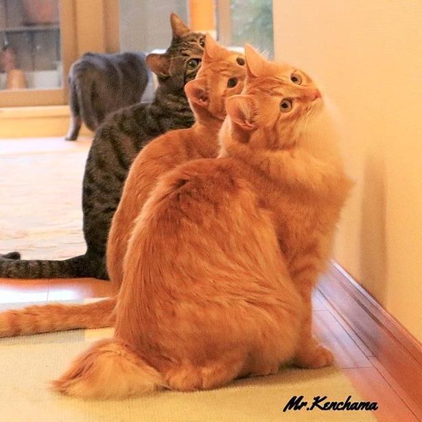 【写真】完全一致!見事にシンクロを決める3匹の猫たちがかわいすぎる