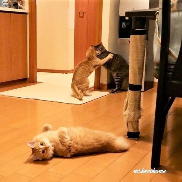 くるみとレオが喧嘩する横でくつろぐナッツ