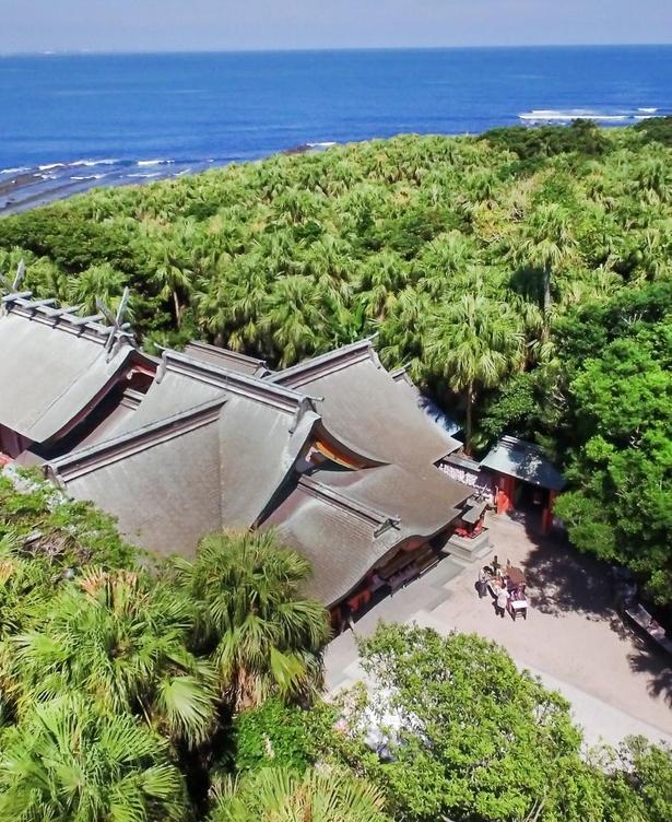 【写真】亜熱帯性植物に囲まれた、全国でも珍しいロケーションを誇る青島神社