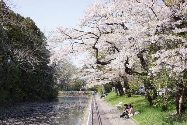 【写真】桜の名所としても知られている
