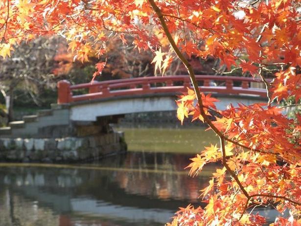 源平池と紅葉の景観はみもの