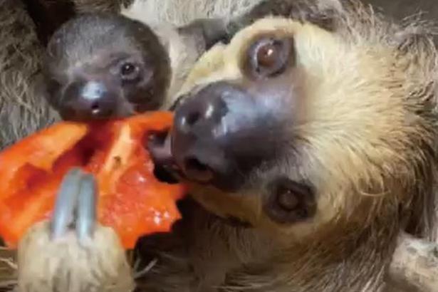 お母さんの食べているものが、気になって仕方ない様子