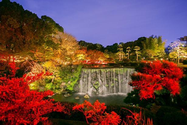 美しい紅葉のライトアップは必見