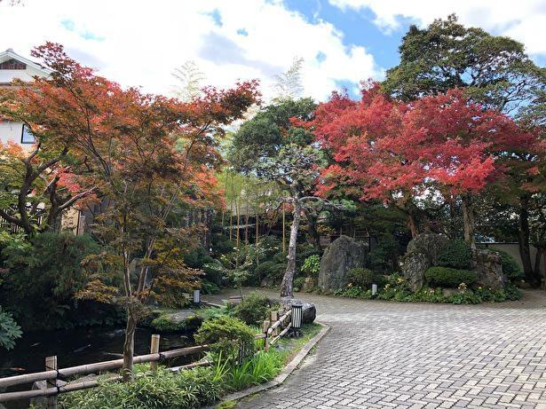 紅葉を眺めながら散歩したい