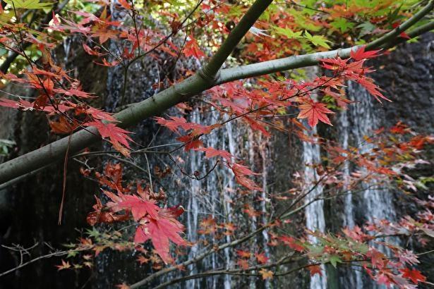 滝と紅葉がベストマッチな一枚