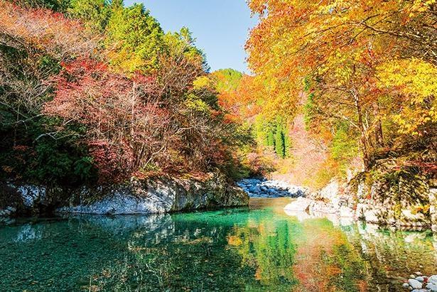 紅葉と清流が作り出す、天然のコントラストを楽しもう / 阿寺渓谷
