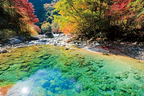 水底の小石まで見えるほど澄み切った、エメラルドグリーンの清流 / 阿寺渓谷
