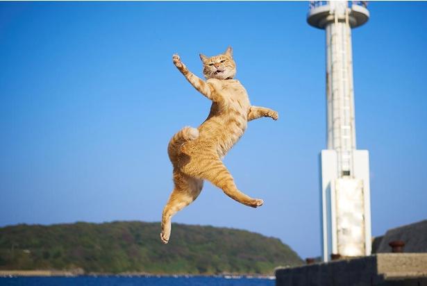 躍動感たっぷりのネコ写真で話題沸騰!
