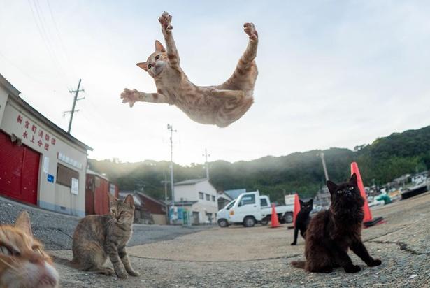 超広角レンズで撮影。周囲のネコや背景を入れるとまた違った趣の一枚に